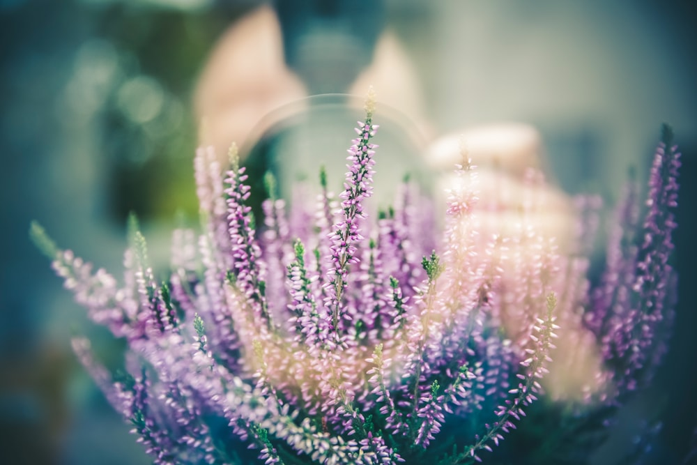 floral-camera-mashup2-min.jpg